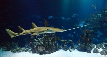 Por el calentamiento de los océanos la fauna marina se desplaza hacia los polos