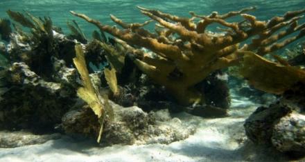 México: La mortandad de corales recrudece la crisis del sargazo