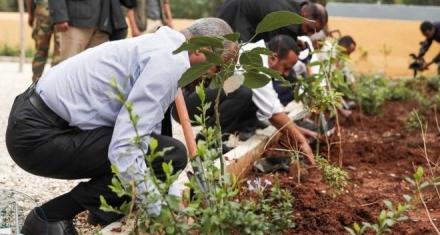 Etiopía logró el record de plantar más de 350 millones de árboles en 12 horas