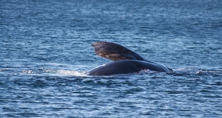 España declaró el corredor de cetáceos del Mediterráneo
