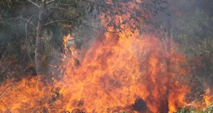 Los incendios en Bolivia dañaron miles de hectáreas de bosque