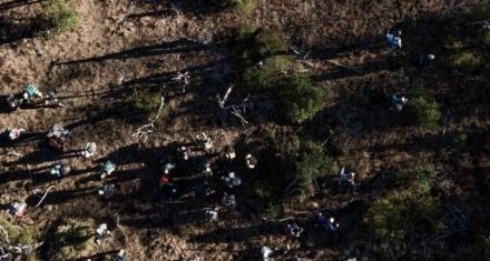 Chubut: Voluntarios reforestaron un bosque incendiado en Cholila