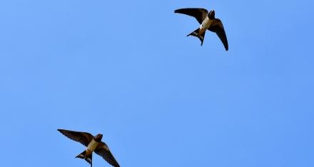 Estados Unidos: Se registró una muerte masiva de aves migratorias