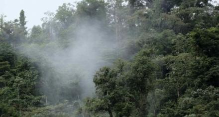 Los corredores biológicos de Costa Rica como puentes de la conservación de la biodiversidad