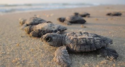 México: Decomisaron más de 15 mil tortugas que serían enviadas a China de forma ilegal
