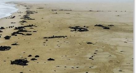 7 mil focas muertas en las costas de Namibia