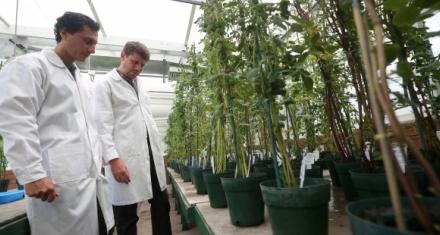 Investigadores desarrollaron plantas que pueden fabricar nanomateriales