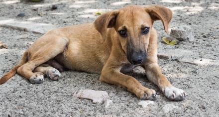 España: 300 mil mascotas abandonadas buscan hogar