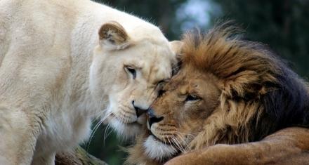 Mammal study explains 'why females live longer'
