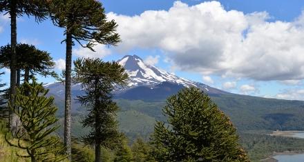 Ecosistemas degradados: Puede durar siglos su recuperación total
