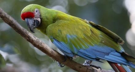 Tráfico de especies: tercer negocio ilícito más rentable