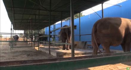 Primer hospital para elefantes en India