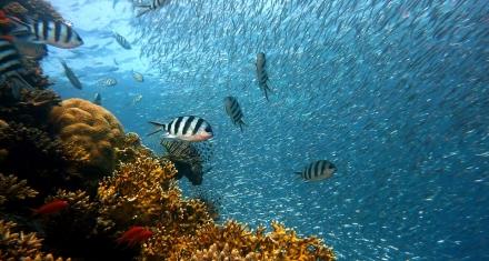Se está volviendo cada vez más escaso el oxígeno en los océanos