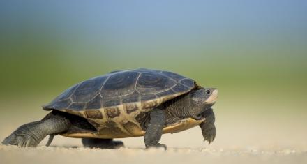 Extraen ADN de productos de carey para combatir la caza furtiva de tortugas