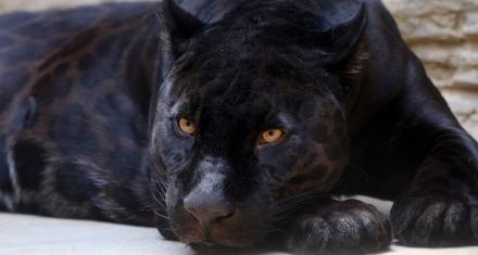 Se supera la barrera de las 100 mil especies amenazadas de extinción