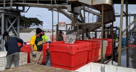 Estados Unidos: La asociación de pescadores clave para proteger especies en la Bahía de Monterrey