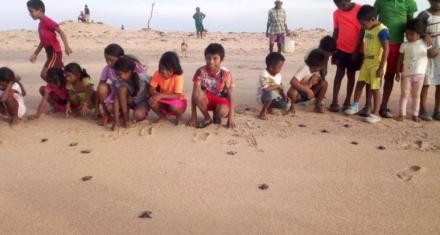Colombia: Las tortugas que dieron su primer viaje al mar de la mano de niños Wayuú