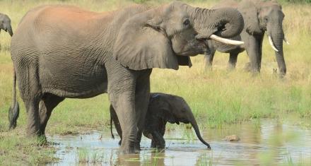 Hay una esperanza para los elefantes