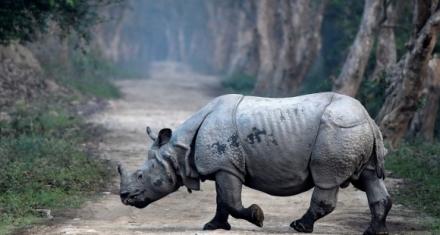 India: Censo a rinocerontes de un solo cuerno