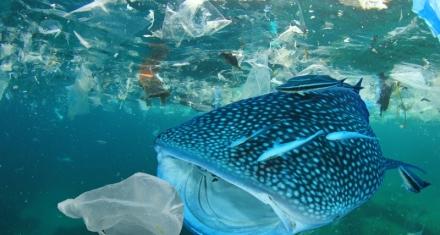 ¿Por qué los animales marinos comen plástico?