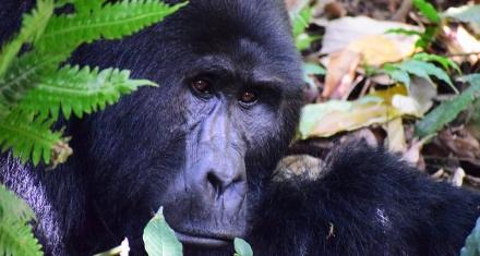 Dos especies que dejan de estar en peligro crítico de extinción