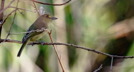 El pájaro que resistió el embate del huracán Iota en Providencia