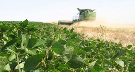 Francia y Brasil enfrentados por soja asociada a deforestación en amazonia