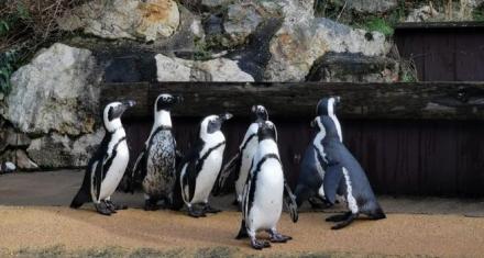 Francia: 22 mil personas compraron un zoo para liberar a sus animales