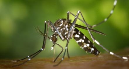 China: Descubren una fórmula para erradicar al mosquito tigre
