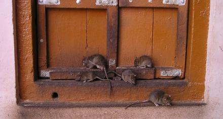 Los animales que pueden transmitir enfermedades se suelen concentrar en las ciudades