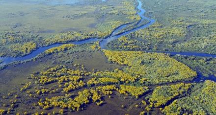 Ambientalistas exigen un enfoque político a los incendios y al cambio climático