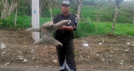Operativo de Interpol que incluyó a Argentina rescató más de 30 mil animales