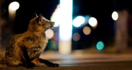 Mamíferos cada vez más nocturnos
