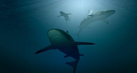 17 especies de tiburones están en