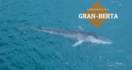 """La ballena azul """"Gran Berta"""" que llegó a las costas de Honduras aparece muerta"""