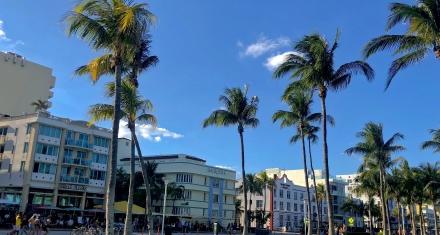 Las representativas palmeras de Miami serán reemplazadas por árboles de sombra