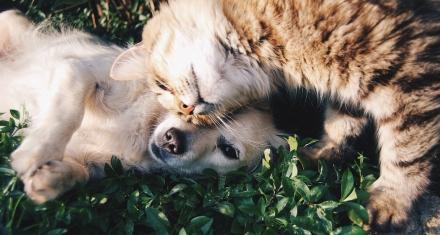 Reino Unido: Quieren prohibir la venta de perros y gatos menores de 6 meses