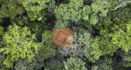 Cuenca del Congo: El segundo pulmón verde del planeta