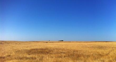 La reforestación y el consumo responsable son claves para combatir la desertificación