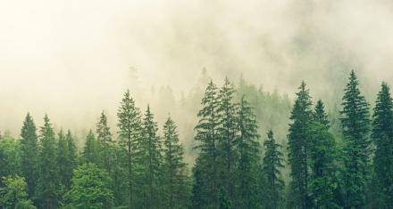 Europa: Se aceleró la pérdida de áreas forestales
