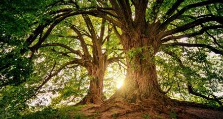 Australia will plant 1 billion trees to combat climate change