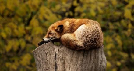 Coronavirus lockdown wildlife recordings appeal