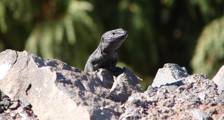 Alerta por la creciente extinción de los animales vertebrados