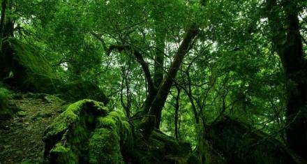 Gracias a Google Earth descubren un bosque virgen y sin explorar
