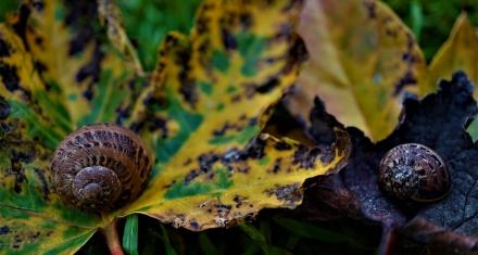 México: Falta garantizar el presupuesto para la Comisión Nacional para el Conocimiento y uso de la Biodiversidad