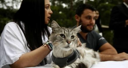 Colombia: Por primera vez, implantan un marcapasos a un gato