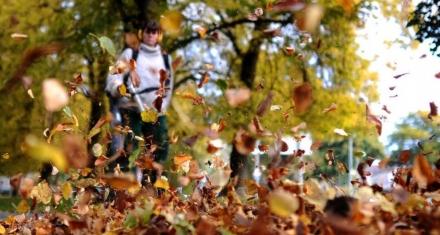 Alemania: Advierten que limpiar las calles con sopladores de hojas puede alterar la vida de muchas especies de insectos
