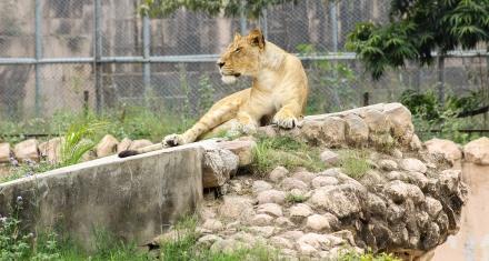 Coronavirus: Funding crisis threatens zoos' vital conservation work