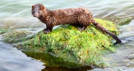 Prevén aumento de especies invasoras con el cambio climático