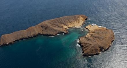 Galápagos: Descubren más especies invasoras en el archipiélago